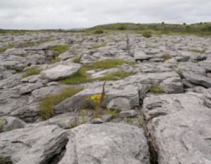 The Burren by Leigh Maher