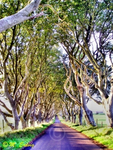 Dark Hedges Armoy