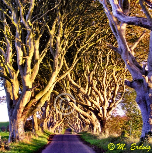 Dark Hedges Stranocum