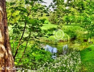 Blarney Woods afc WEB