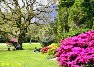 Muckross Garden